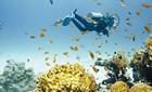 Redsea & Diving
